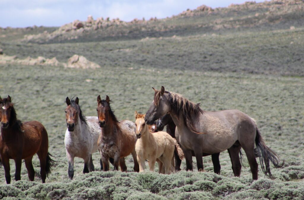 Riding with Wild Horses on the Oregon Trail